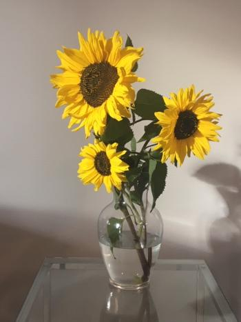 Sunflowers to Brighten Your Day!